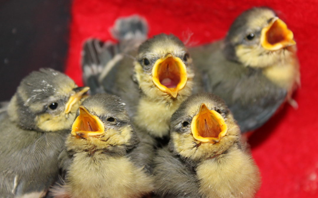 Vogelfütterung im Winter – Worauf Sie achten müssen