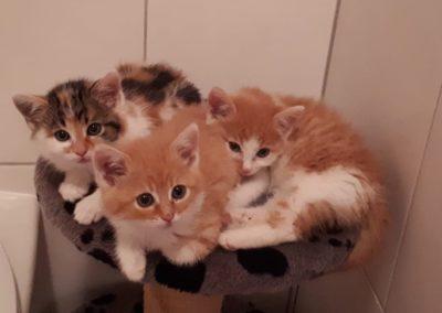 Babykatzen (Symbolfotos)