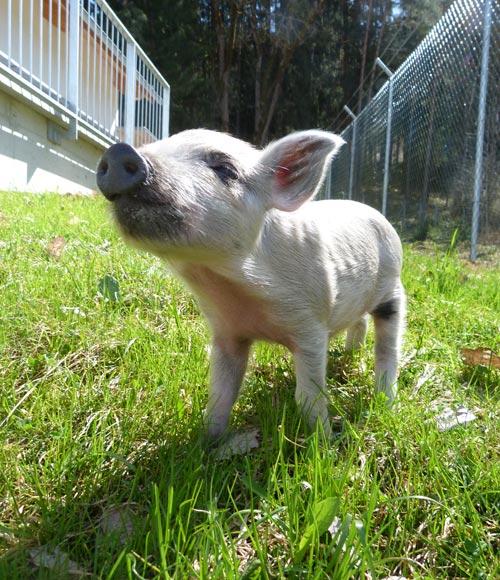 Den Tierschutzverein mit einer Spende unterstuetzen