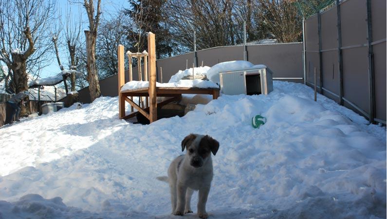Tierzuliebe: Tierschutzverein investiert bis zu 1,2 Mio Euro in die Unterbringung der Tiere in den Tiroler Tierheimen