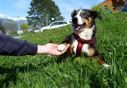 Hund Adoptieren Tierschutz Tirol