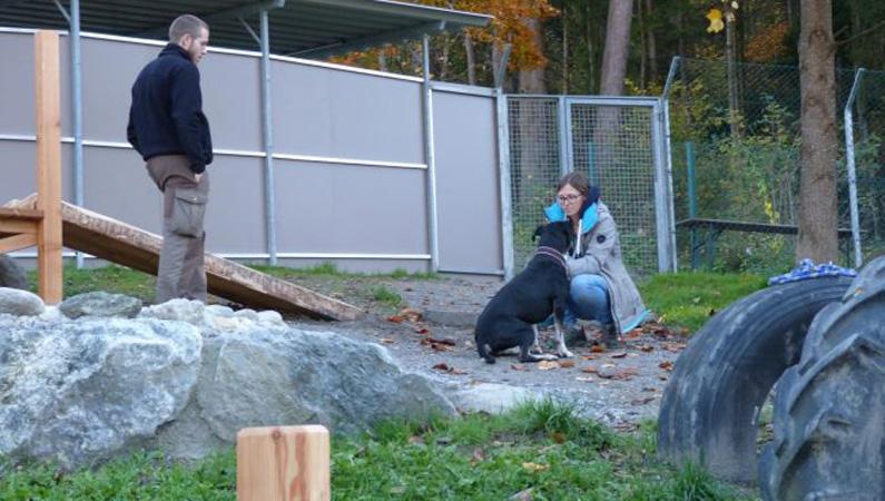 Hundstalente Training