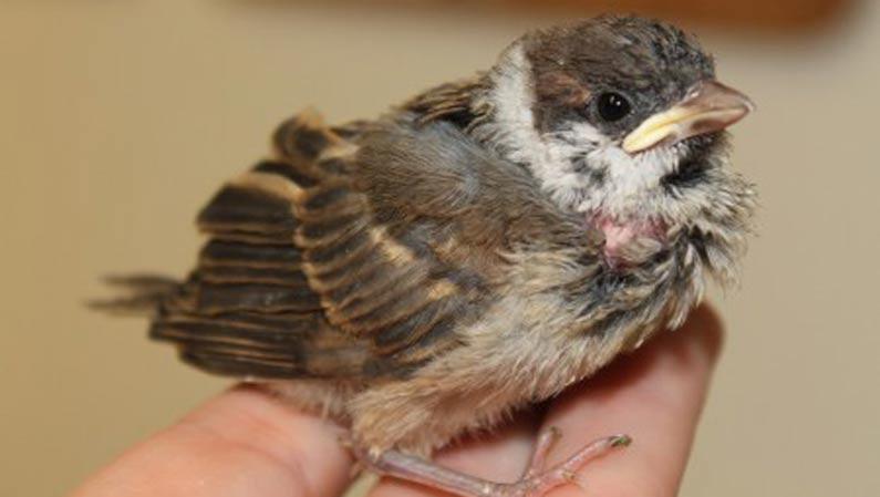 Jungvogel nach Wintereinbruch gefunden - So können Sie helfen
