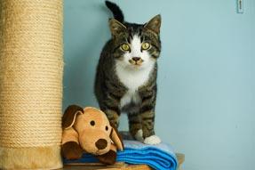 Katze mit Spielzeug aus dem Tierschutzverein Shop