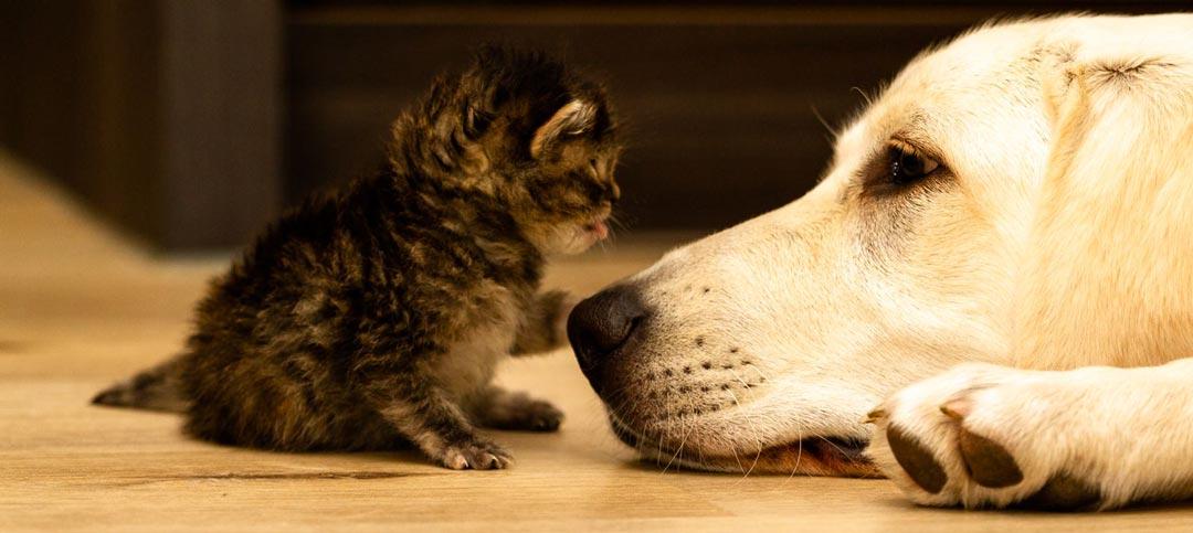 Katze und Hund kuscheln