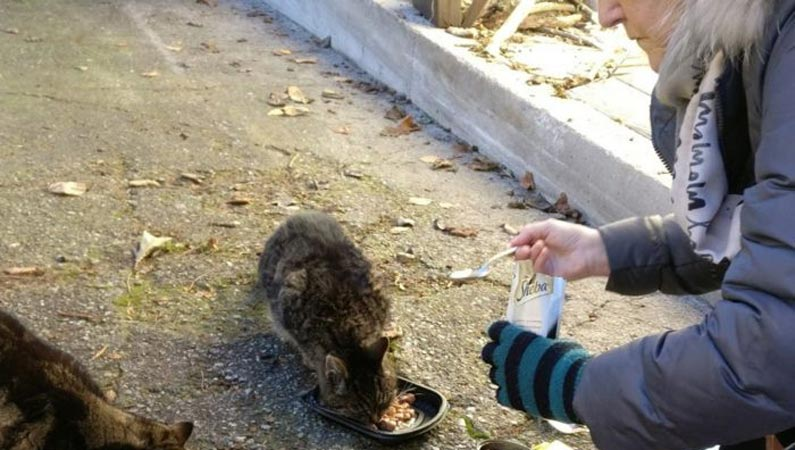Streunerkatzen füttern