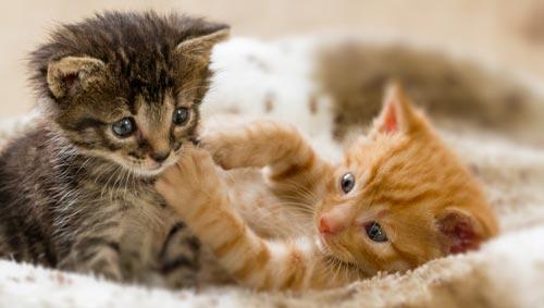 Zwei Katzen kuscheln miteinander
