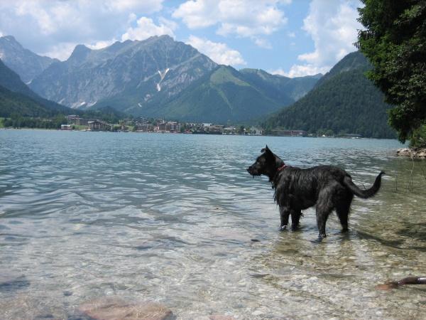 Bademöglichkeiten mit Hund in Tirol