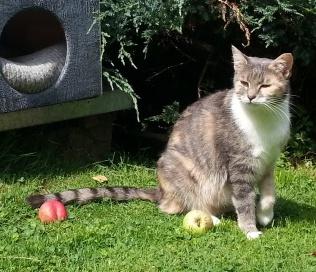 Tauschaktion: Äpfel gegen Katzen-Mitbringsel