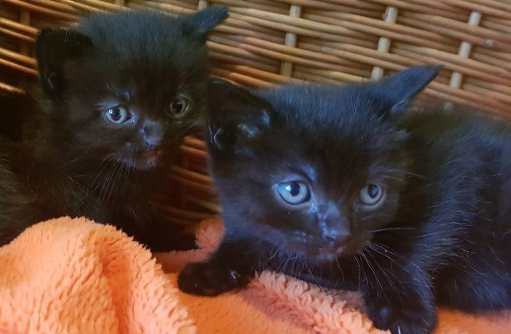 Trotz Kastrationsgesetz Fast 500 Babykatzen Im Vorjahr In Tiroler