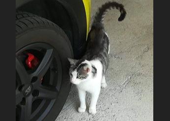 Katze, Ebbs(09/18)