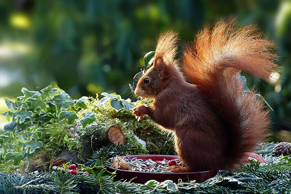 Eichhörnchen brauchen nach Extrem-Sommer unsere Hilfe, um den Winter zu überleben!