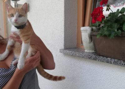 Katze, Fügen(09/18)