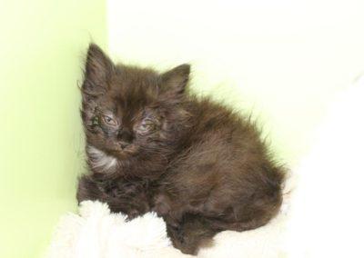 Katze, Hall/Thaur (09/18)