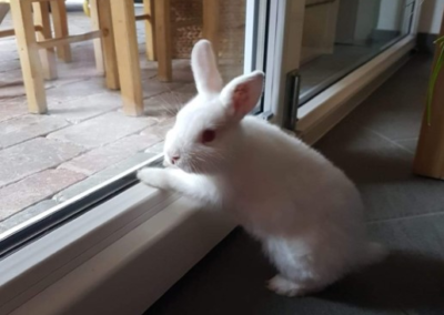 Kaninchen, Sautens (10/18)