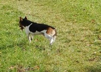 Hund, Fiecht(10/18)