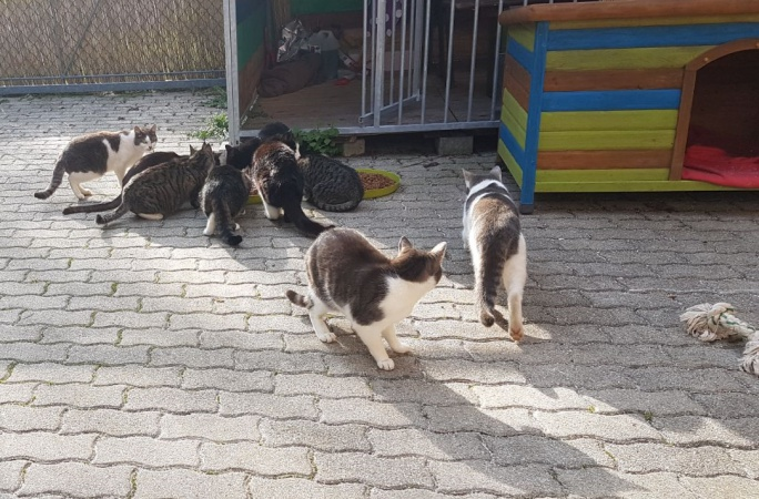 Streunerkatzen brauchen dringend Futter!!!