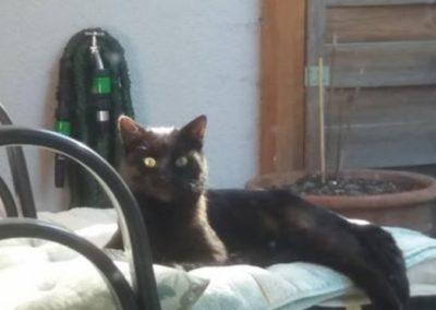 Katze, Hall(10/18)