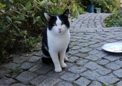 Katze, Kundl(10/18)