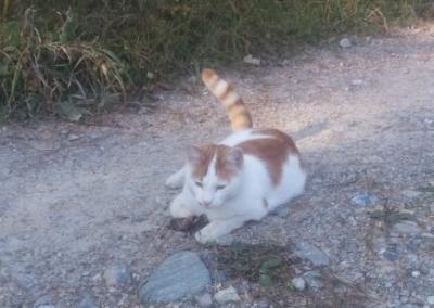 Katze, Rum(10/18)
