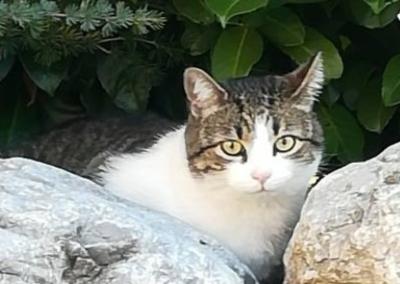 Katze, Schwaz(10/18)