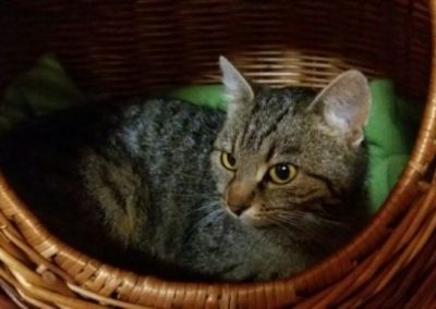 Katze, Walchsee (10/18)
