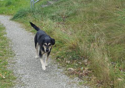 Hund, Baumkirchen (11/18)