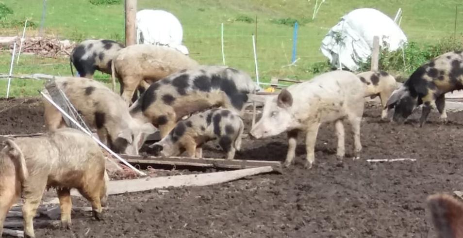 Tierschutzverein unterstützt Landwirt bei Hofverkleinerung