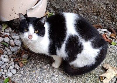 Katze, Kufstein (11/18)