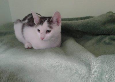 Katze, Mils(11/18)