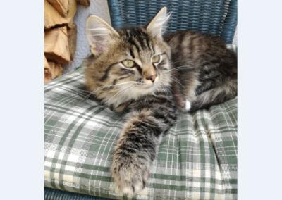 Katze, Oberperfuss (11/18)