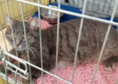 Katze, Wenns(11/18)