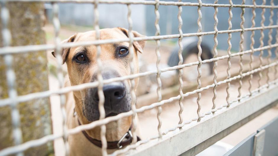 """TT-Artikel vom 2.12.18 """"Hundeführerschein für Halter, die Tiere aus dem Heim holen"""""""