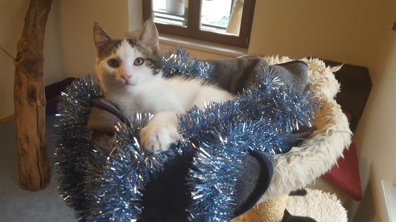 Alle Jahre wieder: Vorsicht mit Weihnachtsdeko und Leckereien