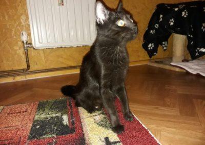 Katze, Hopfgarten (12/18)