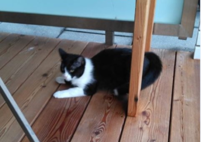 Katze, Kundl(12/18)