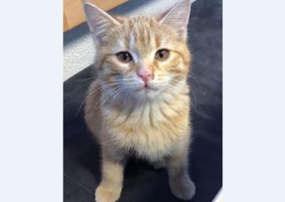 Katze, Mieming(12/18)