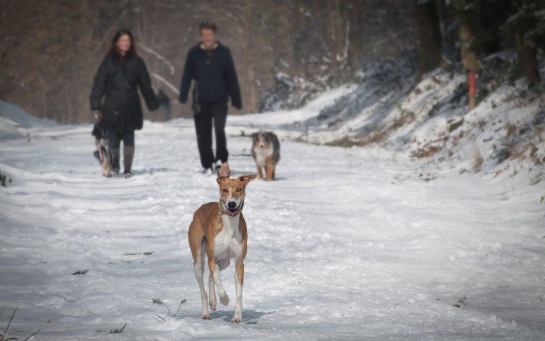 Spaß im Schnee kann Folgen haben