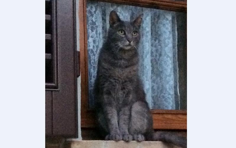 Katze, Igls(01/19)