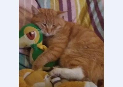 Katze, Telfs(01/19)