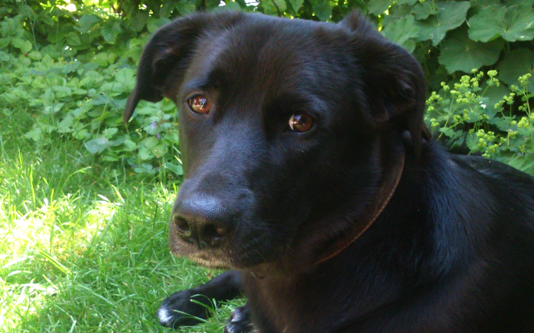 Tierkommunikatorin Herta im Gespräch mit Leila – Teil 2