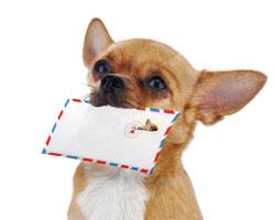 Nachricht von Hund