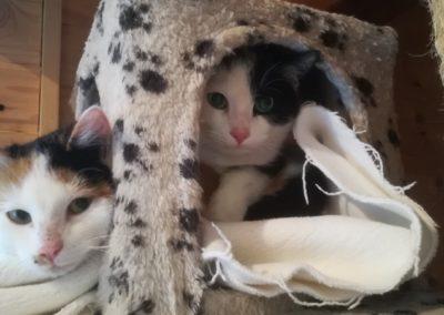 Yuri & Yoschi