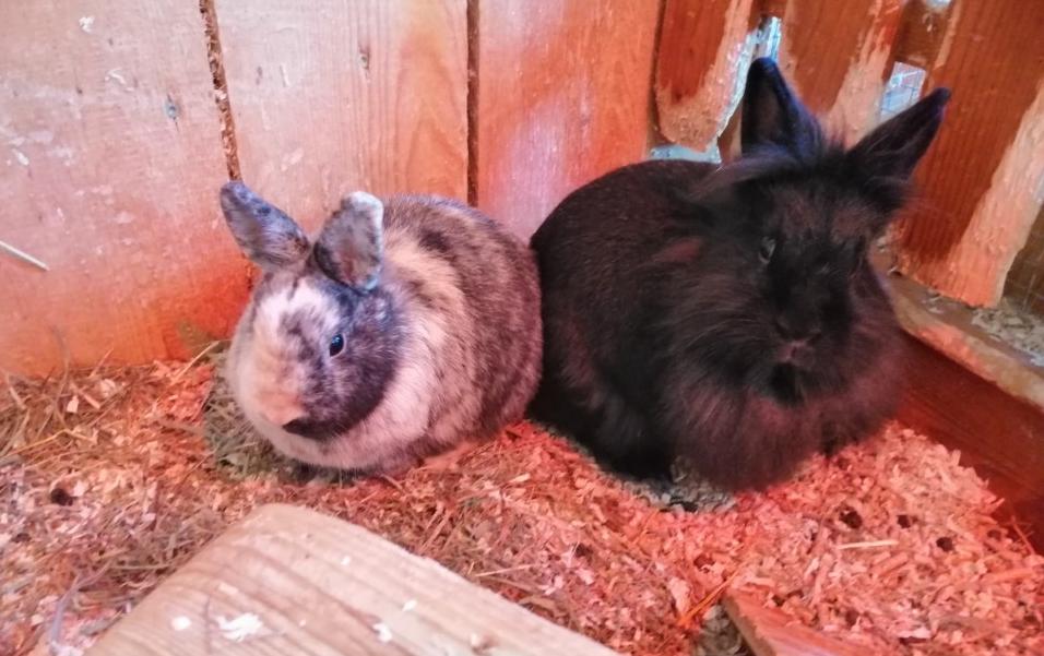 Nino und Lina