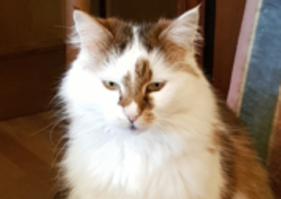 Kater, Erl(03/19)