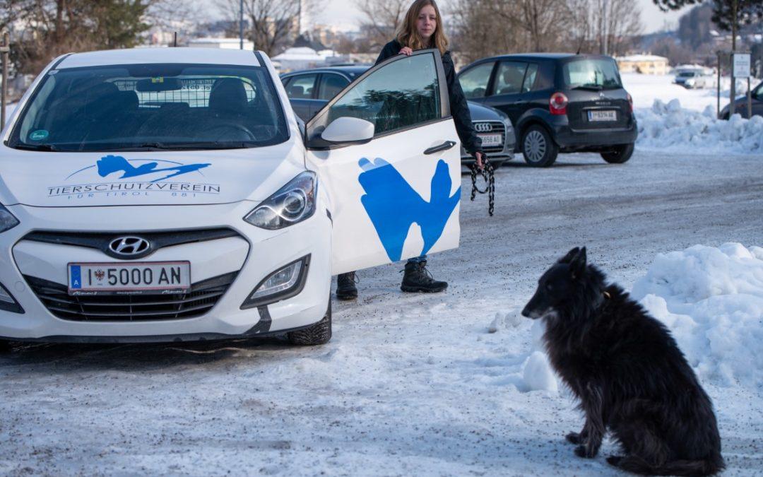 Notdienst des Tierschutzvereins für Tirol und Tierärzte-Notruf