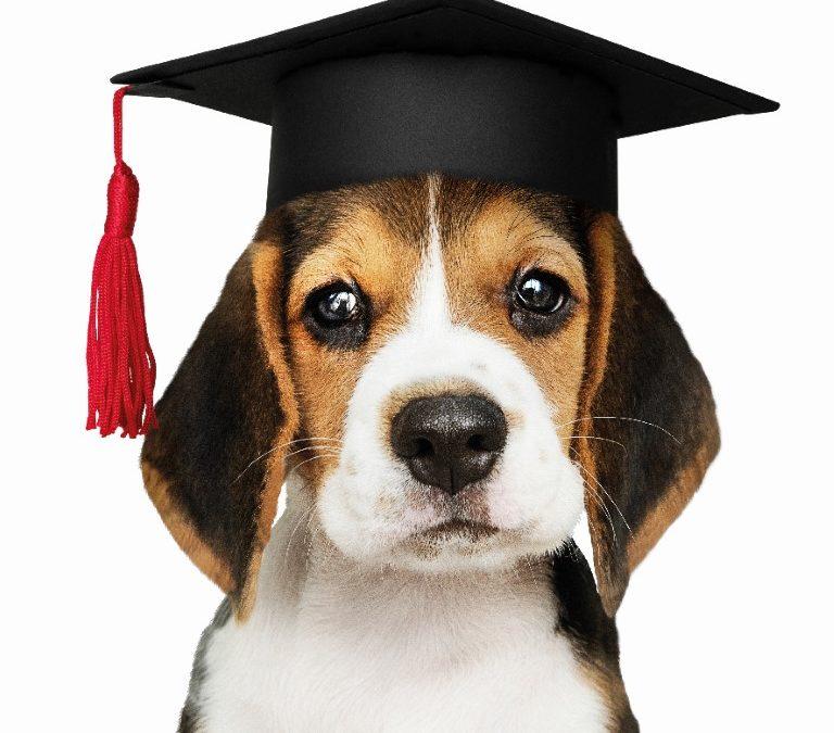 Sachkundekurs zur Hundehaltung