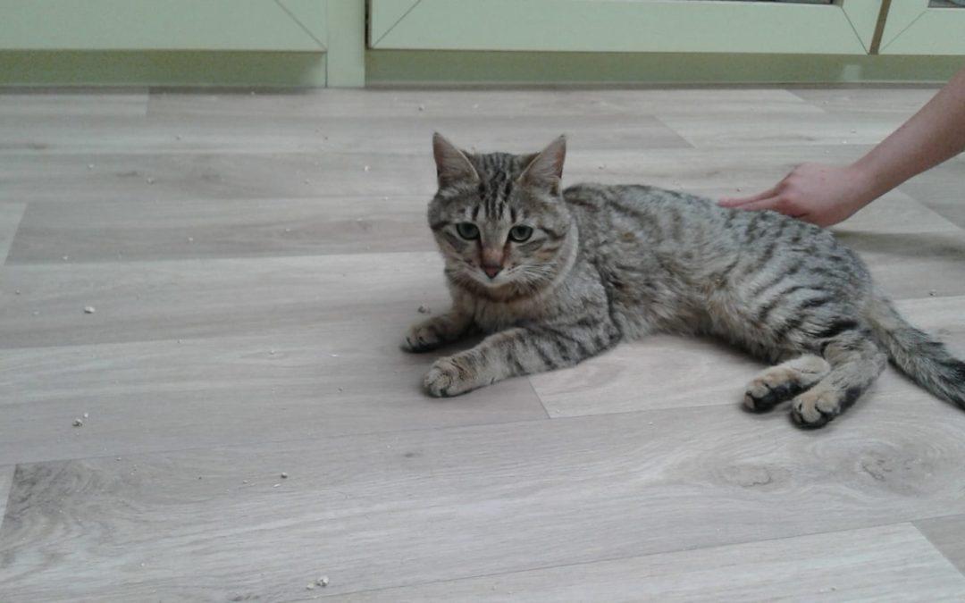 Katze, Seefeld(04/19)
