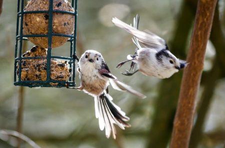 Ganzjahresfütterung von Wildvögeln