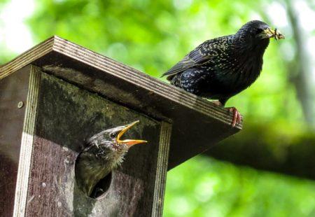 Nistkästen: Ein wichtiger Beitrag für die Vogelwelt